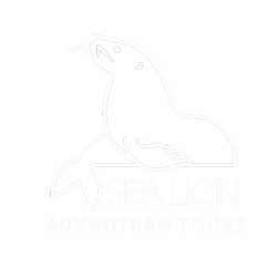 Sea Lion Adventure Tours